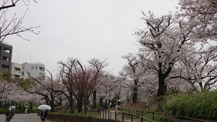 隅田公園 桜まつり