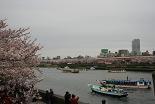 桜 隅田川屋形船