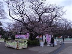 公園内(一分咲き)