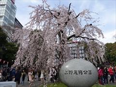 上野恩賜公園入口(枝垂れ桜)