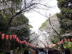 上野恩賜公園入口(満開)
