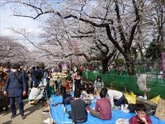 上野恩賜公園 花見宴会