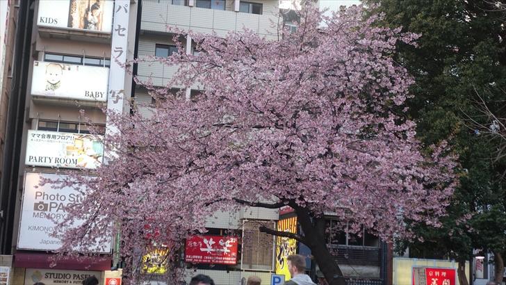 上野恩賜公園入口 桜