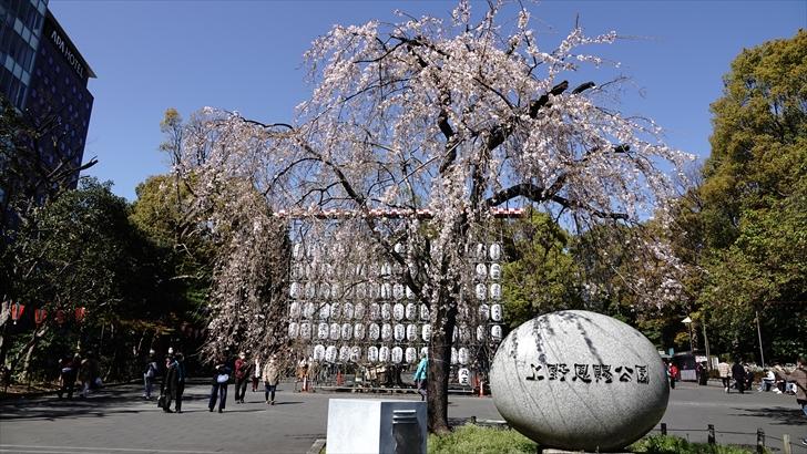 上野恩賜公園 桜